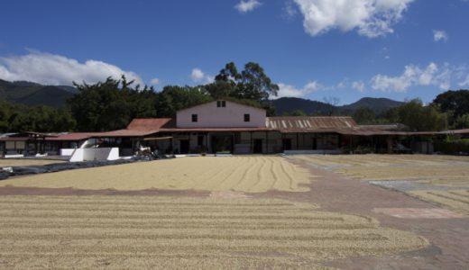 コーヒー農園&博物館見学!スペイン語勉強8日目!, Antigua, Guatemala