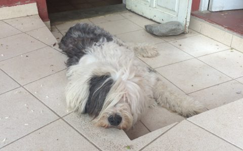 モジャ犬と戯れながらリラックス!「Cabañas las lilas hostel」, Cochabamba , Bolivia
