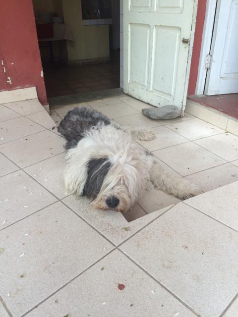 Cochabamba - 06dog