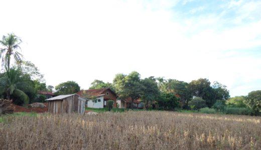 大豆畑の草刈り@ゆば農場 , Mirandópolis , Brazil