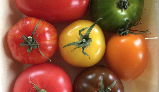 フランスにはこれだけ種類がある!カラフルトマト7種盛り! , Le Grand Pressigny , France