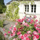 Le Grand Pressigny - 201rose7