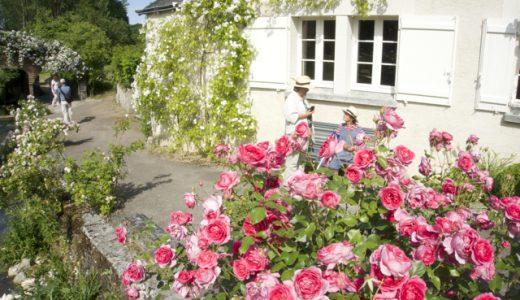 衝撃的な美しさ!一面バラの村「シェディニー(Chédigny)」 , Le Grand Pressigny , France