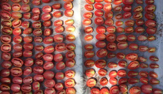 ブルガリアの農園でドライトマト作りに挑戦! , Dobri dol , Bulgaria