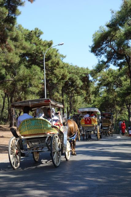 Istanbul - 143horse3
