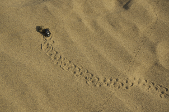 Jaisalmer - 210scarab1