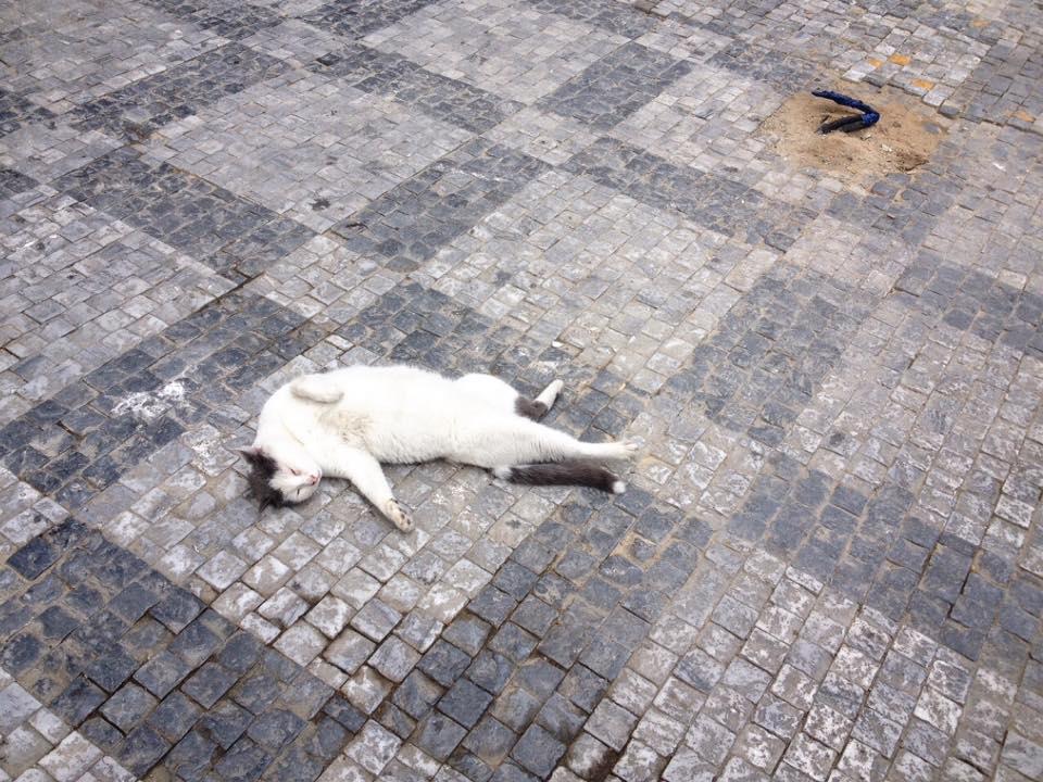 catb2