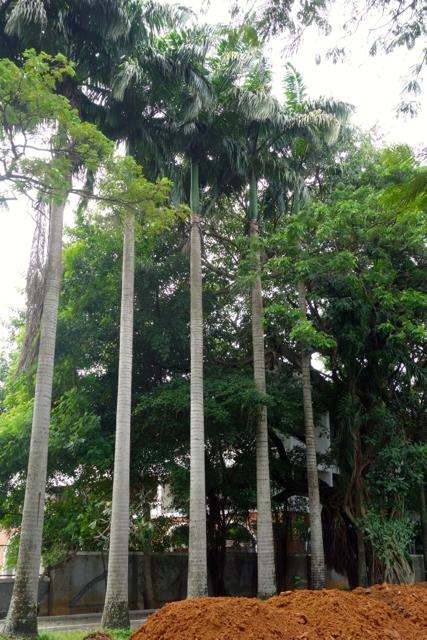 Colombo - 23tree2