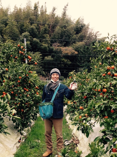 Itoshima - orange