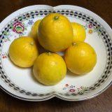 Itoshima -orange4