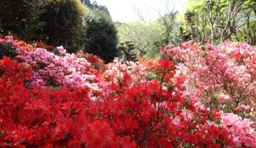 見頃は4月下旬!燃えるように赤い!糸島浮嶽つつじ祭り
