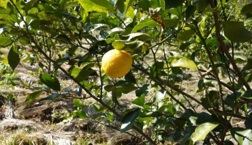 人生は楽しんだモン勝ち!お米と無農薬レモンを育てる「大江農園・志摩の青空」訪問