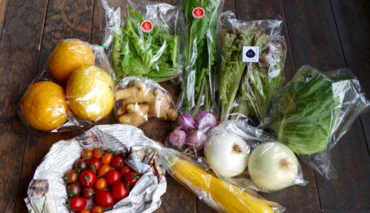 特選!「糸島旬野菜セット」を、いとシネマのご支援者さんへ贈りました。