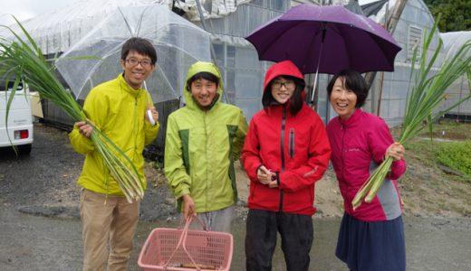 糸島で生姜やハーブを育てる、高倉農園