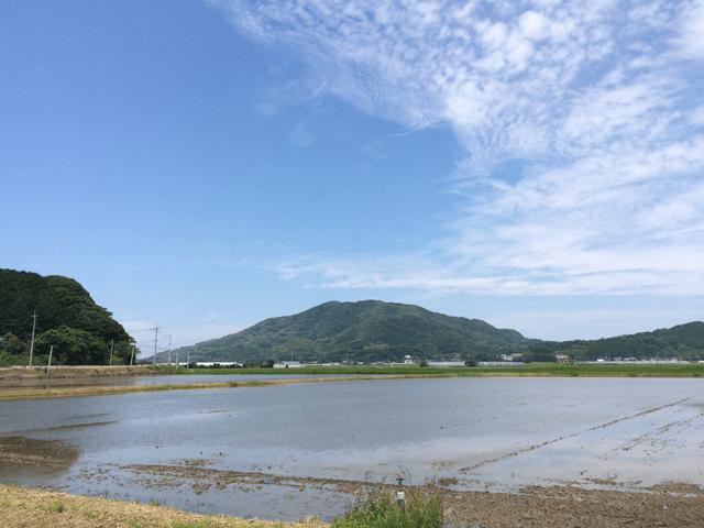 田んぼの向こうの日子山(ひこさん)