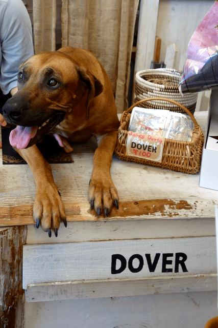 dover - 犬