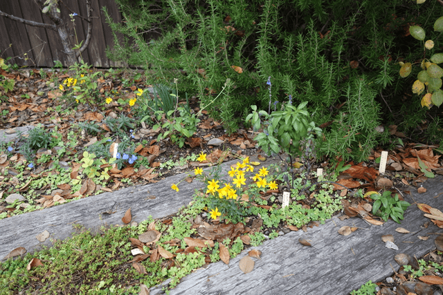 くるみの木 - 庭2