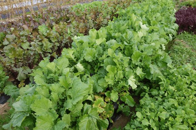 jardinpotager - チーマデラーパ