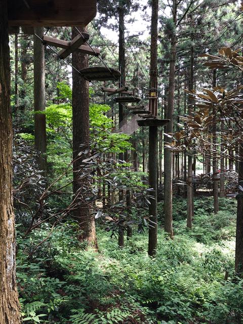 木から木へ移動