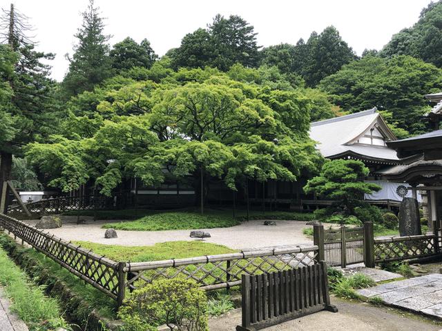 千如寺の大楓