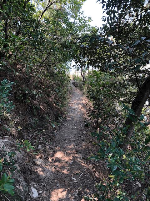 波止場へ向かう小道