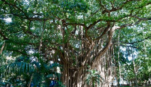 「アルメンダレス公園」巨木ハグエイに覆われた、神秘的な公園