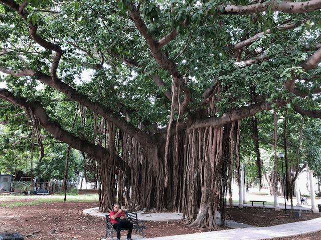 ラザロ・カルデナス公園(Parque Lázaro Cárdenas)